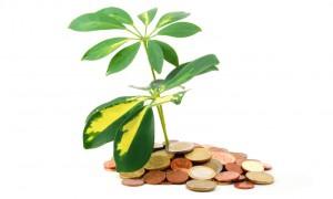 Betaling aan belastingparadijzen: fiscus versoepelt standpunt