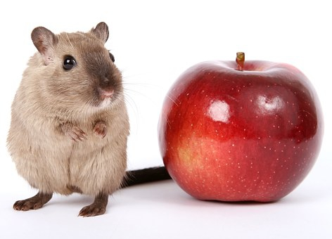 Hamsterhuren, een nieuwe trend in de vastgoedmarkt